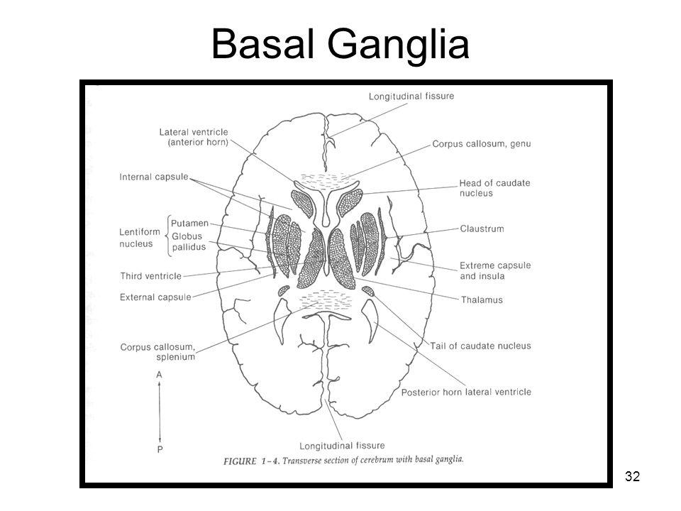 32 Basal Ganglia