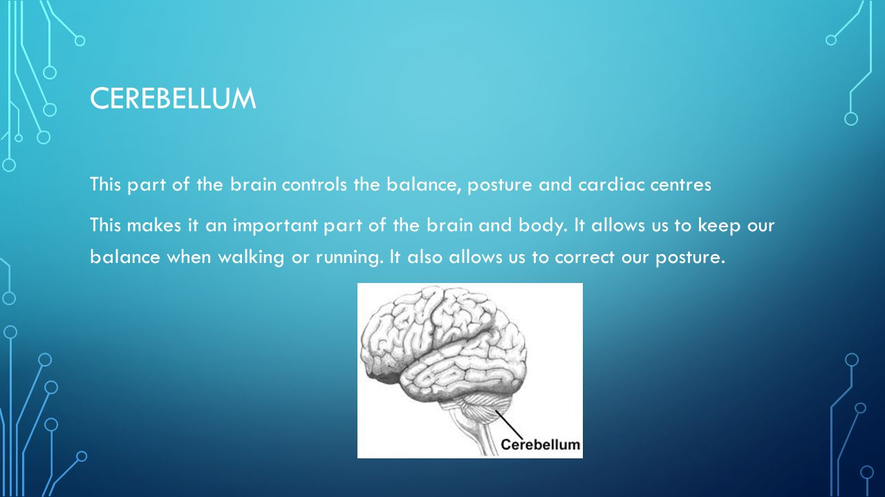 CEREBELLUM This part of the brain controls the balance, posture and cardiac centres This makes it an important part of the brain and body. It allows u