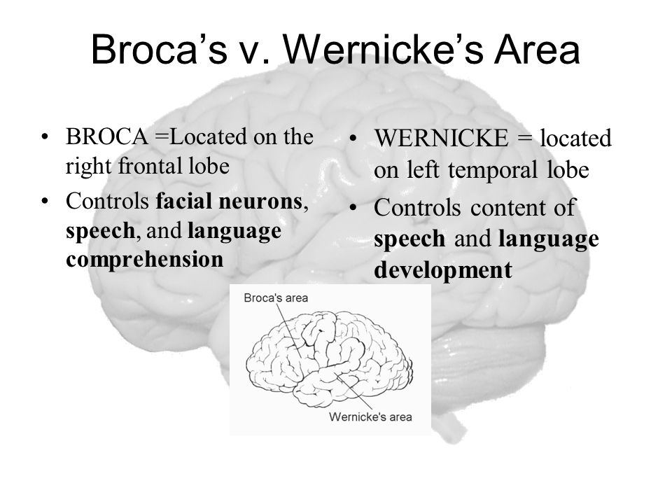 Broca's v. Wernicke's Area BROCA =Located on the right frontal lobe Controls facial neurons, speech, and language comprehension WERNICKE = located on
