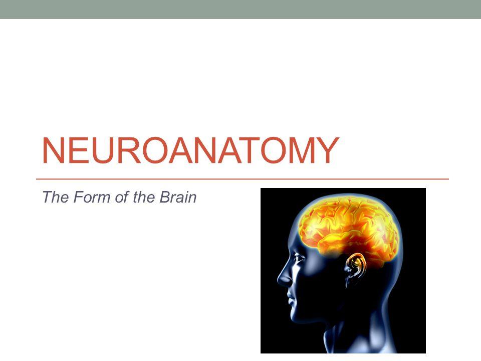 NEUROANATOMY The Form of the Brain