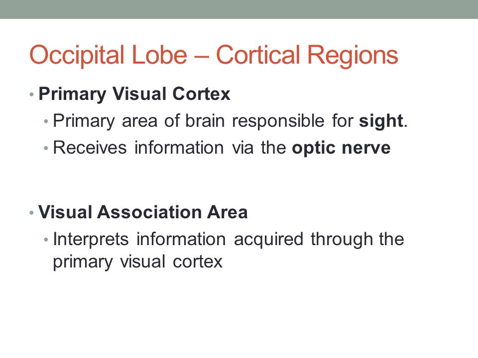 Primary Visual Cortex Primary area of brain responsible for sight. Receives information via the optic nerve Visual Association Area Interprets informa