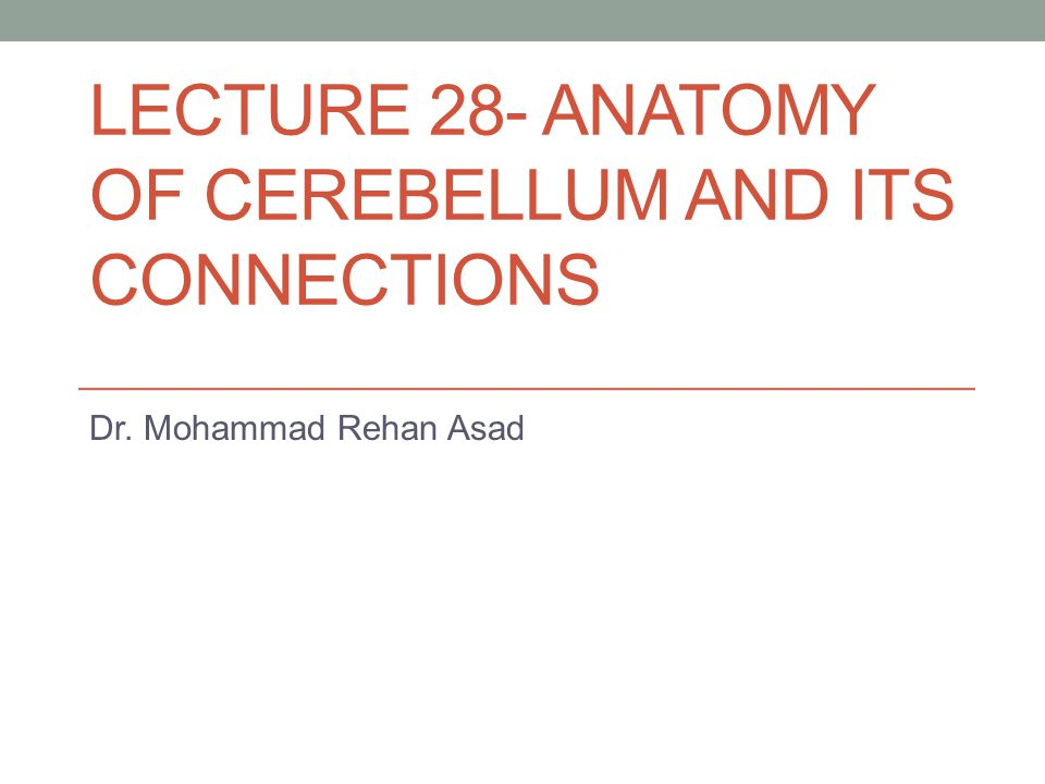 LECTURE 28- ANATOMY OF CEREBELLUM AND ITS CONNECTIONS Dr. Mohammad Rehan Asad