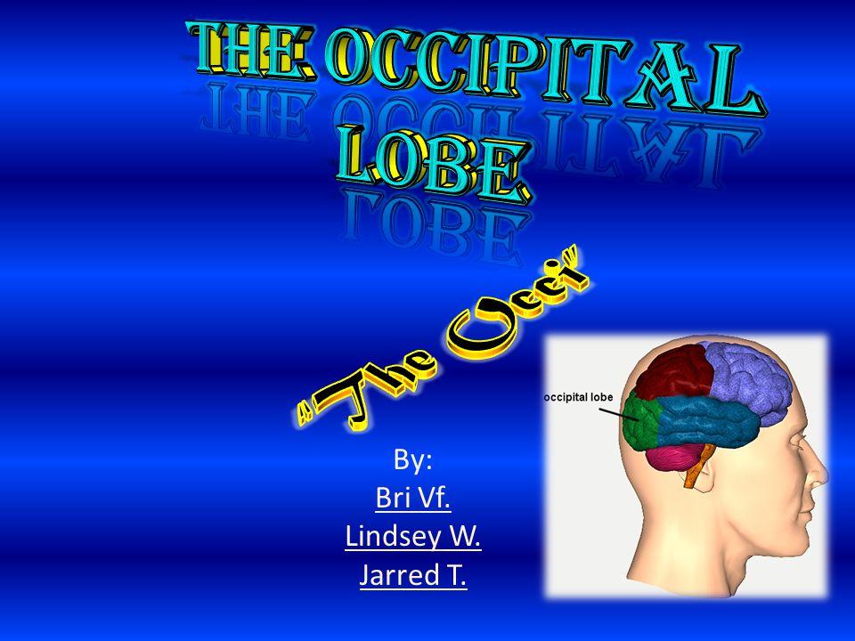 The Occipital Lobe is the rearmost lobe in each cerebral hemisphere of the brain.