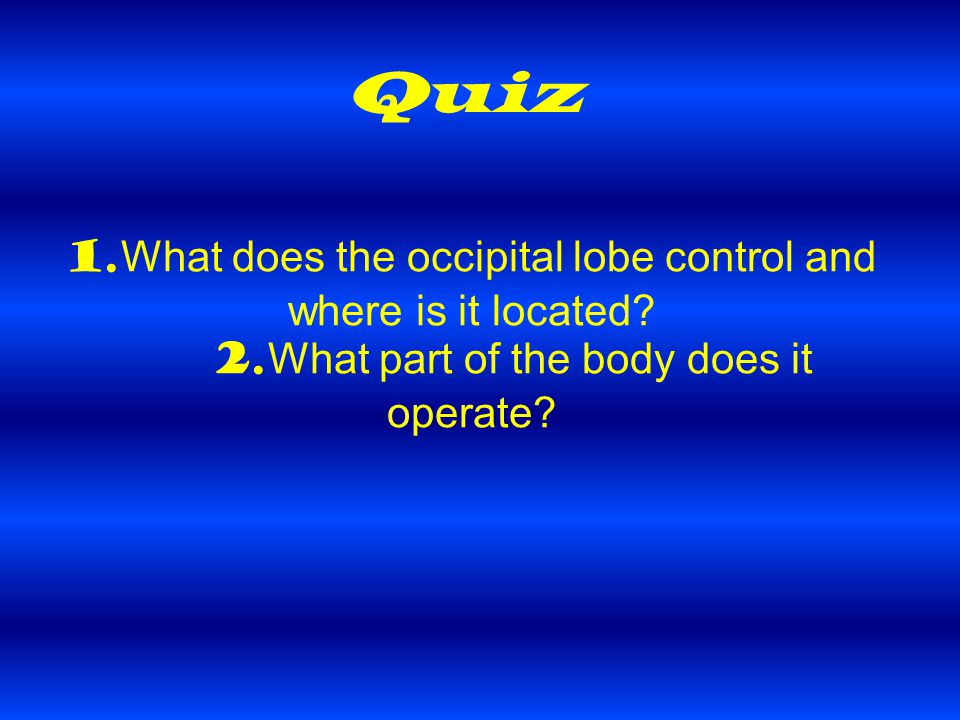 Quiz 1. What does the occipital lobe control and where is it located.