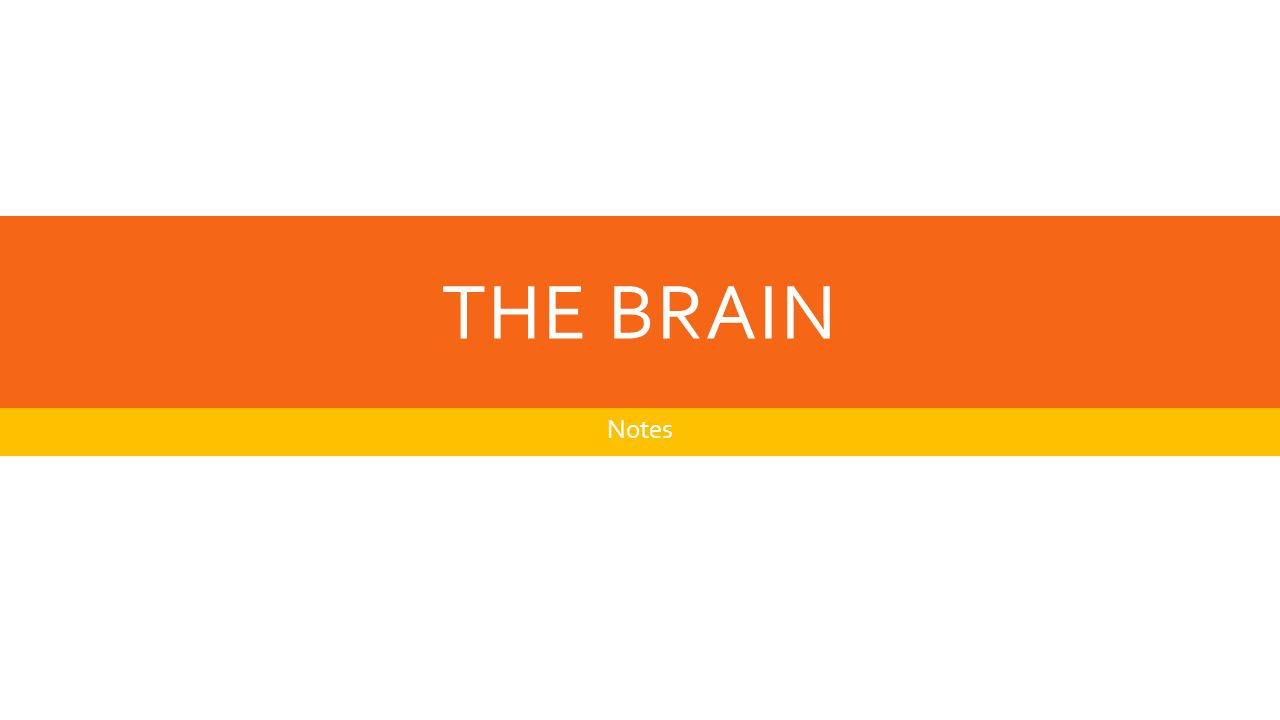 THE BRAIN Notes