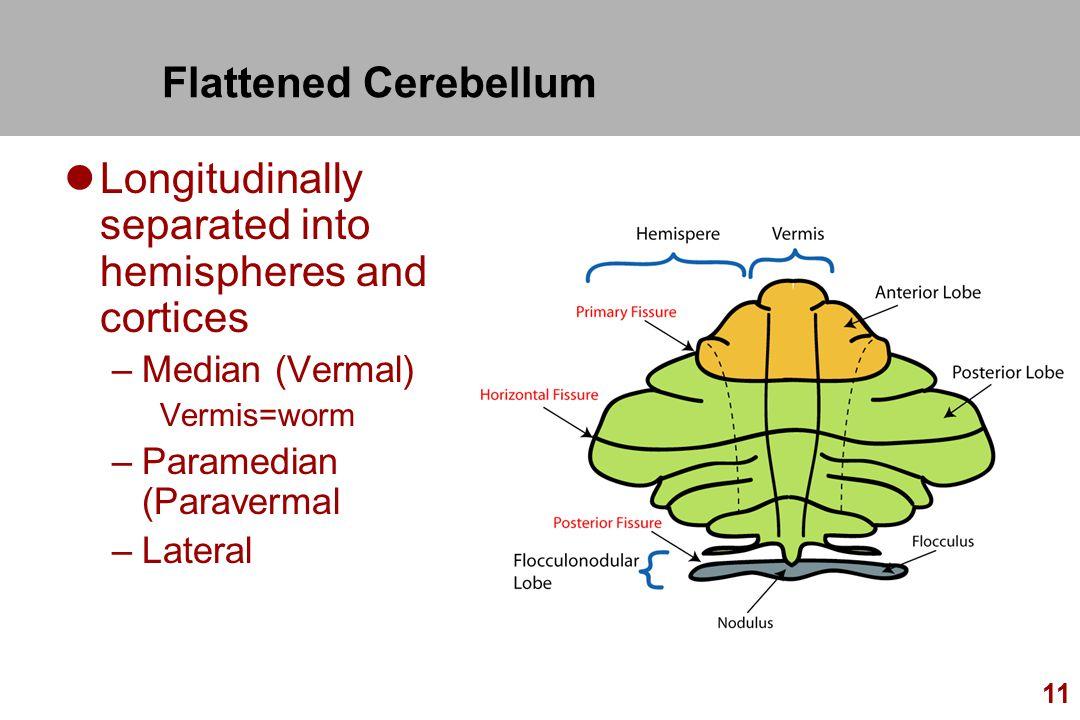 Cerebellum Kiranmayi S.. - ppt video online download