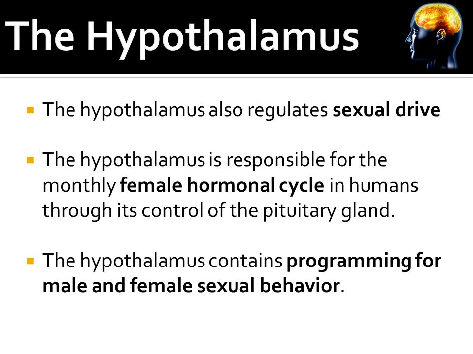  The hypothalamus also regulates sexual drive  The hypothalamus is responsible for the monthly female hormonal cycle in humans through its control of the pituitary gland.