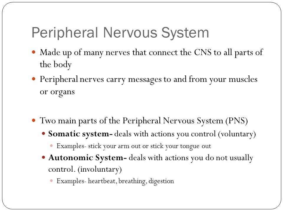 Peripheral Nervous System Made up of many nerves that connect the CNS to all parts of the body Peripheral nerves carry messages to and from your muscles or organs Two main parts of the Peripheral Nervous System (PNS) Somatic system- deals with actions you control (voluntary) Examples- stick your arm out or stick your tongue out Autonomic System- deals with actions you do not usually control.