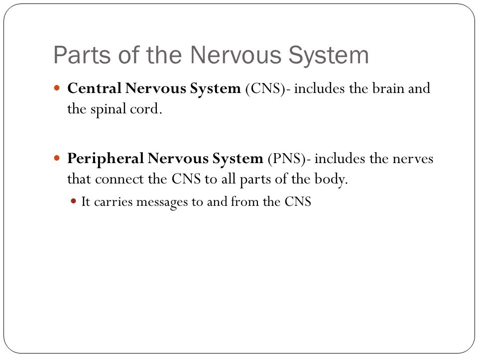 Parts of the Nervous System Central Nervous System (CNS)- includes the brain and the spinal cord.