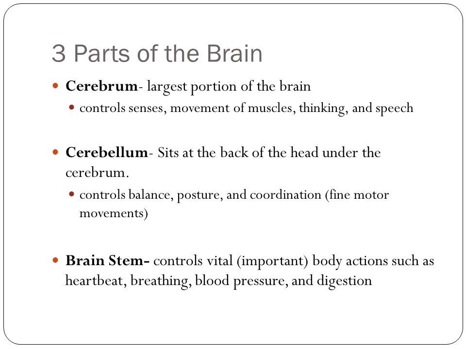 3 Parts of the Brain Cerebrum- largest portion of the brain controls senses, movement of muscles, thinking, and speech Cerebellum- Sits at the back of the head under the cerebrum.