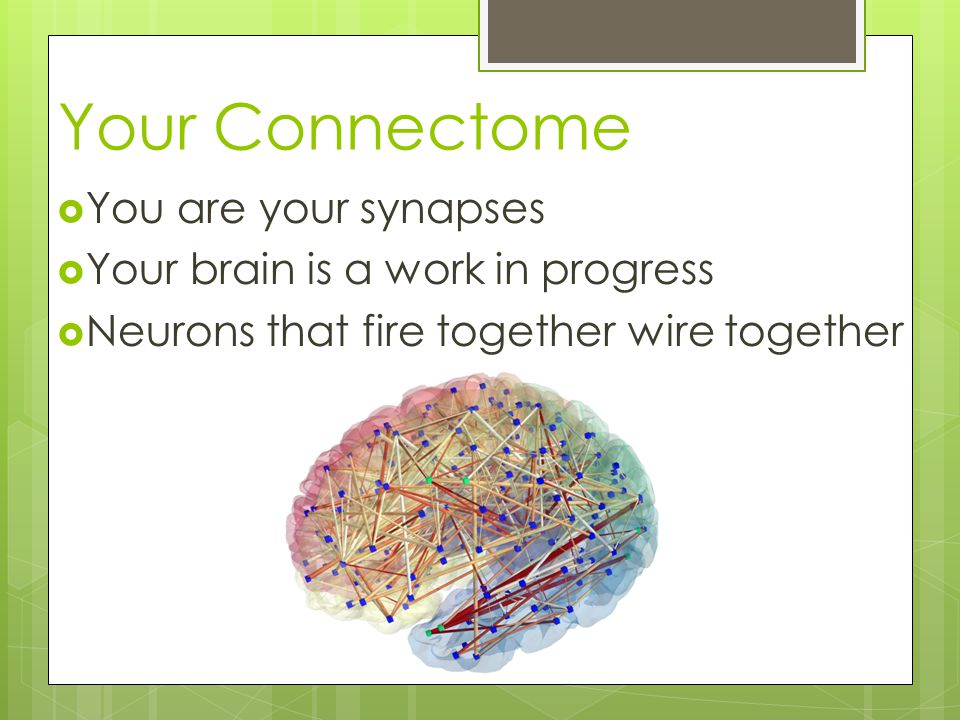 Your Connectome  You are your synapses  Your brain is a work in progress  Neurons that fire together wire together