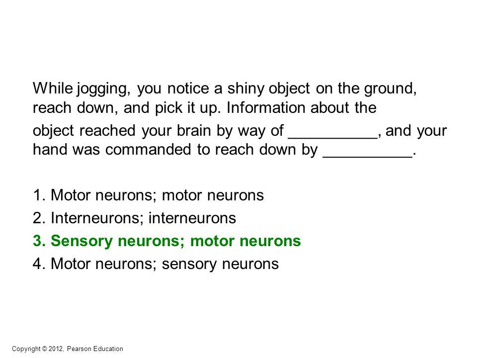 While jogging, you notice a shiny object on the ground, reach down, and pick it up. Information about the object reached your brain by way of ________