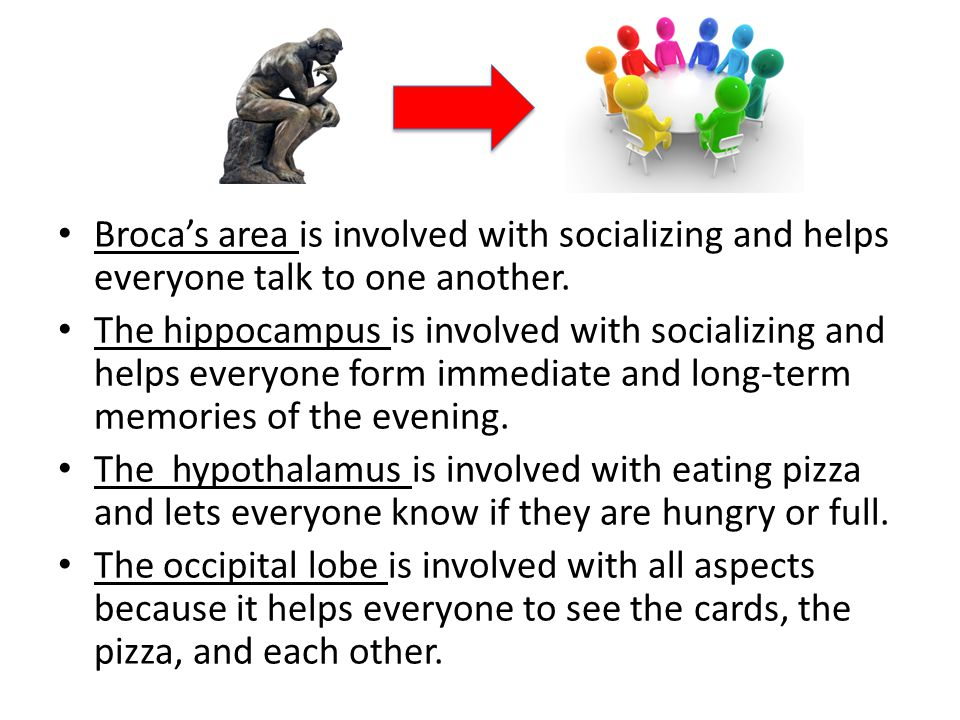 Broca's area is involved with socializing and helps everyone talk to one another. The hippocampus is involved with socializing and helps everyone form