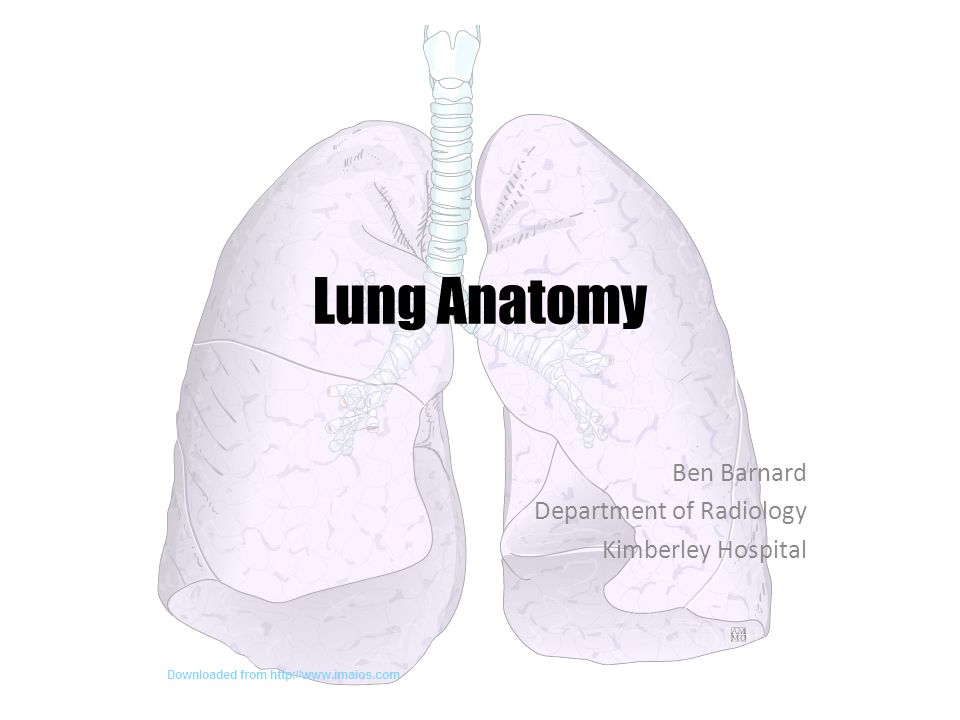 Lung Anatomy Ben Barnard Department of Radiology Kimberley Hospital