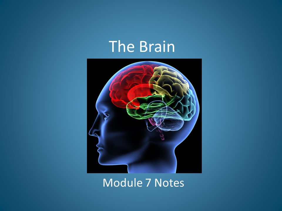 The Brain Module 7 Notes