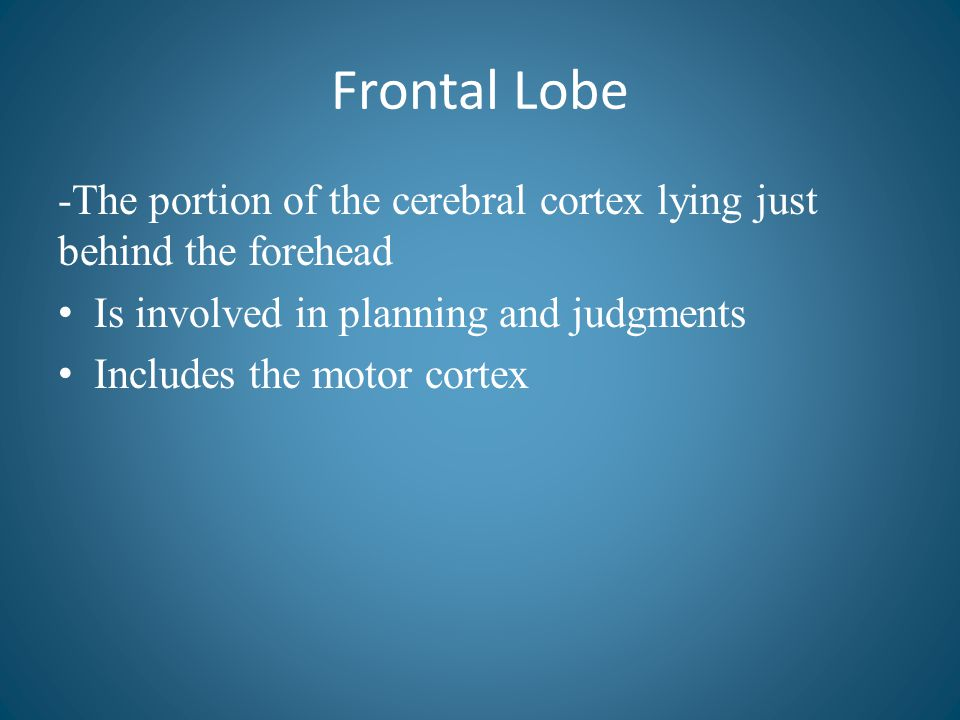 Frontal Lobe -The portion of the cerebral cortex lying just behind the forehead Is involved in planning and judgments Includes the motor cortex