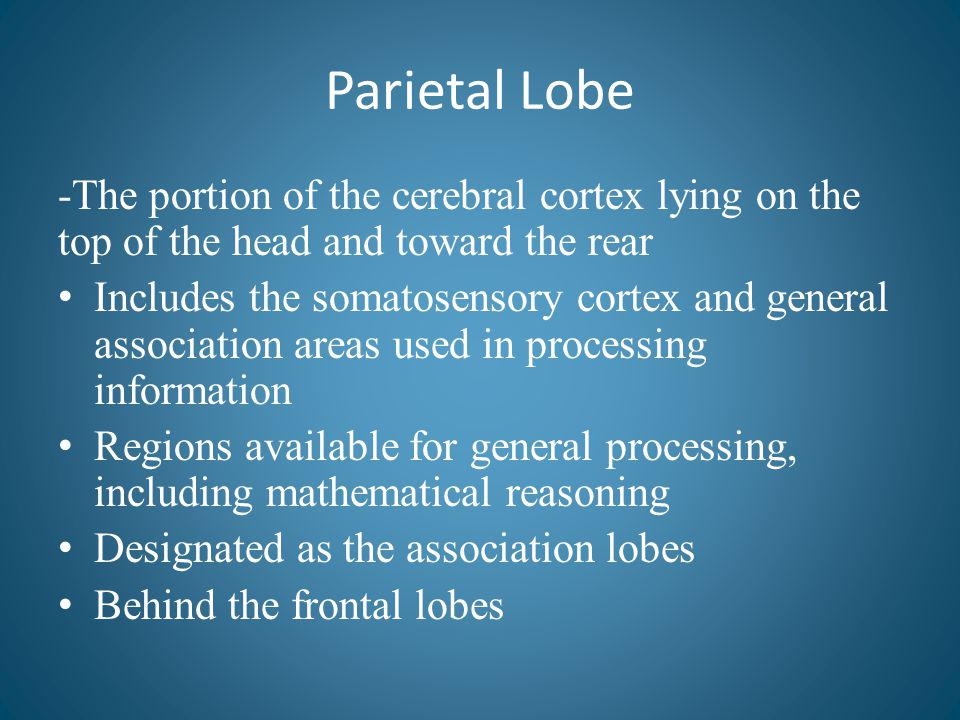 Parietal Lobe -The portion of the cerebral cortex lying on the top of the head and toward the rear Includes the somatosensory cortex and general assoc