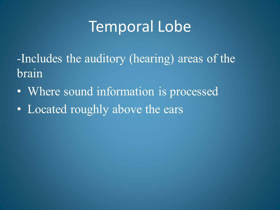 Temporal Lobe -Includes the auditory (hearing) areas of the brain Where sound information is processed Located roughly above the ears