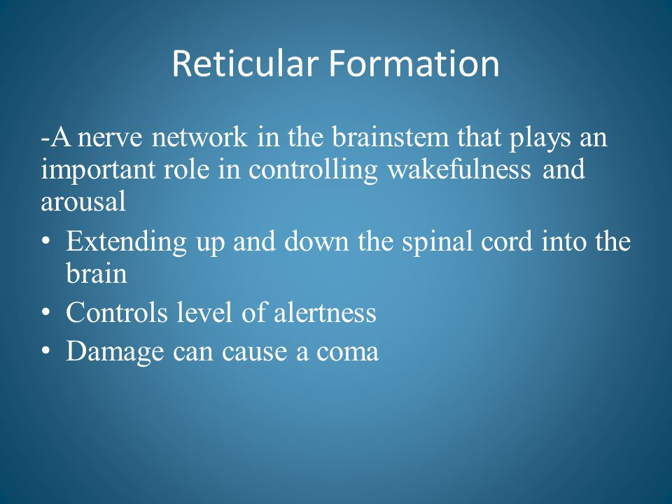 Reticular Formation -A nerve network in the brainstem that plays an important role in controlling wakefulness and arousal Extending up and down the sp
