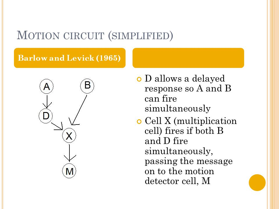 M OTION CIRCUIT ( SIMPLIFIED ) D allows a delayed response so A and B can fire simultaneously Cell X (multiplication cell) fires if both B and D fire