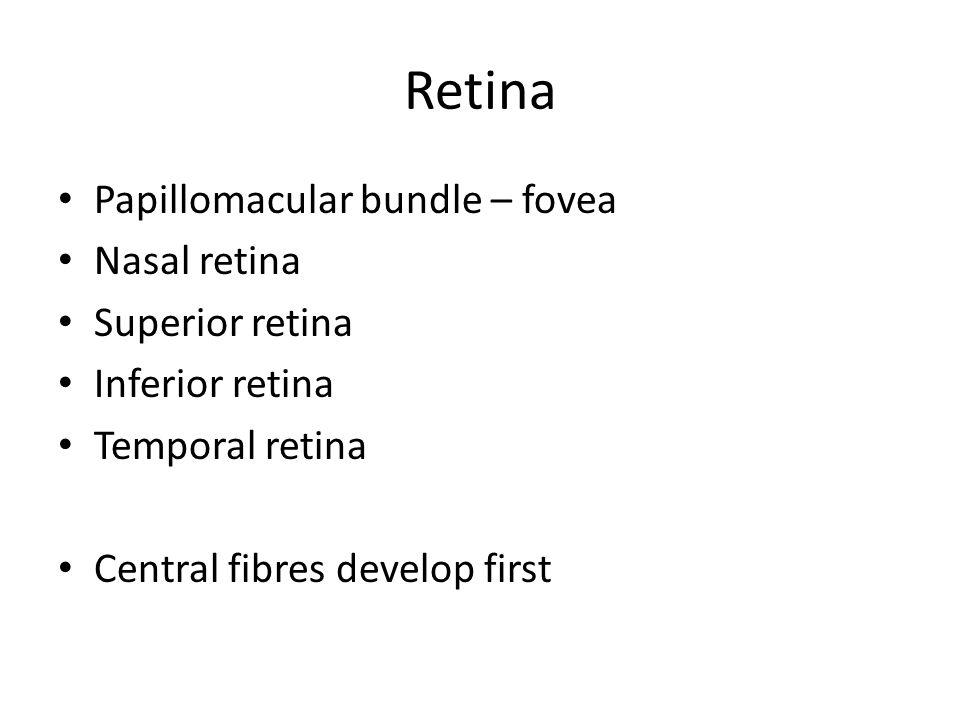 Retina Papillomacular bundle – fovea Nasal retina Superior retina Inferior retina Temporal retina Central fibres develop first