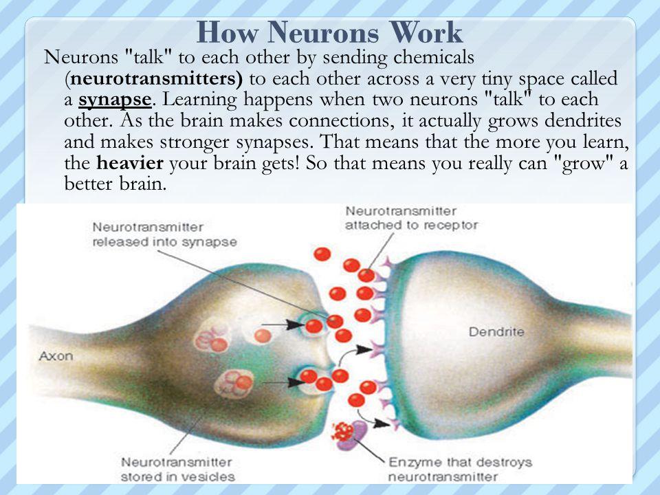 How Neurons Work Neurons