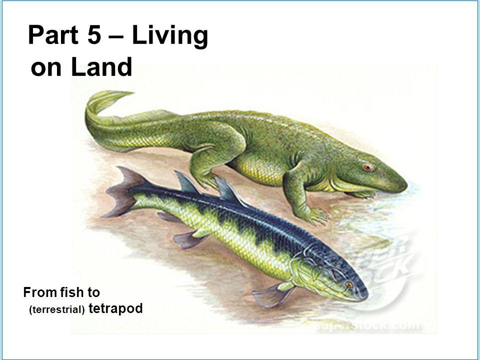 2 terrestrial tetrapod groups