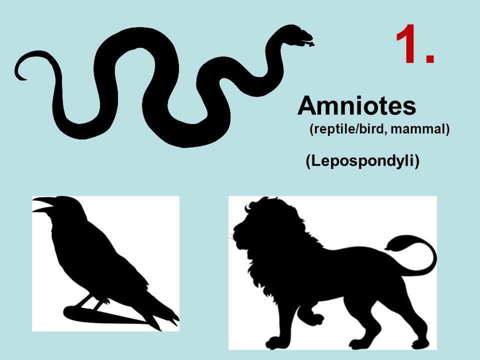 Amniotes (reptile/bird, mammal) (Lepospondyli) 1.