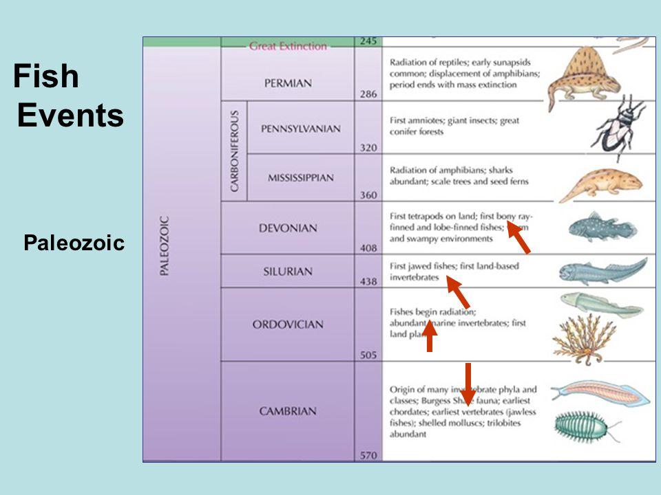Paleozoic Fish Events