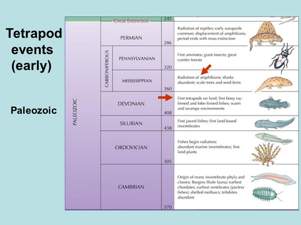 Paleozoic Tetrapod events (early)