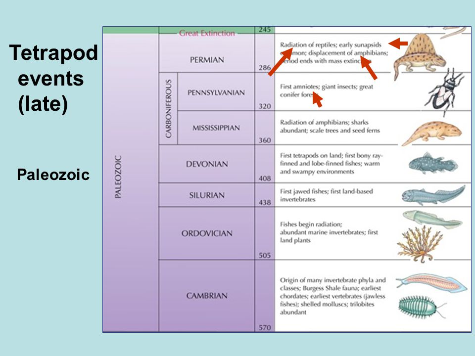 Paleozoic Tetrapod events (late)