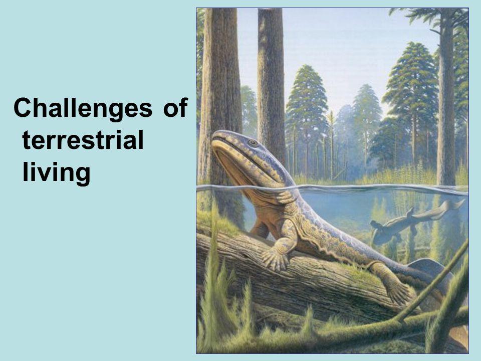 Challenges of terrestrial living
