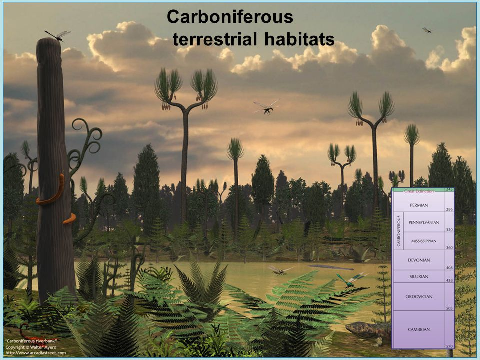 Carboniferous terrestrial habitats