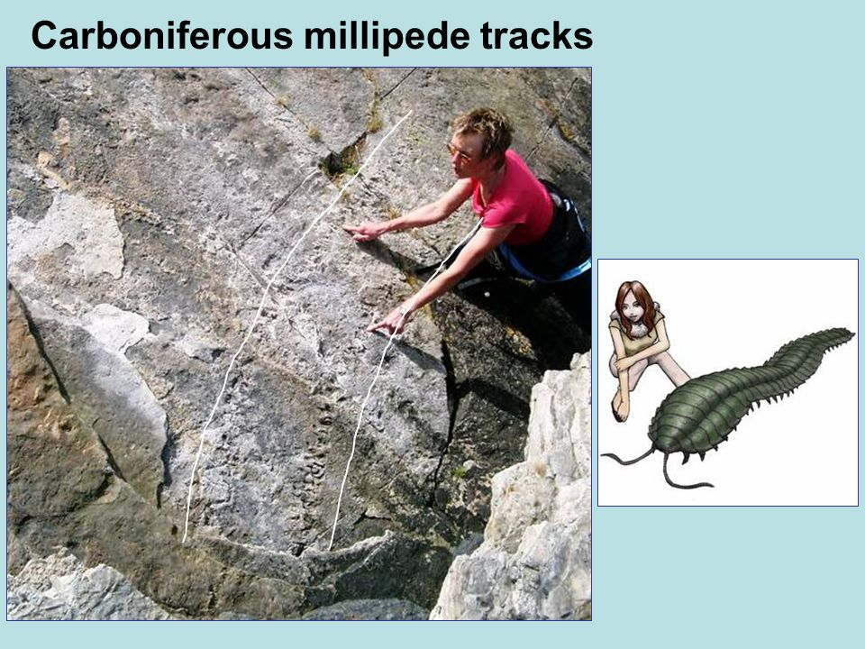 Carboniferous millipede tracks