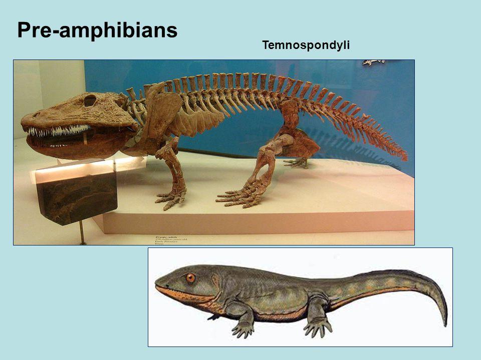 Pre-amphibians Temnospondyli