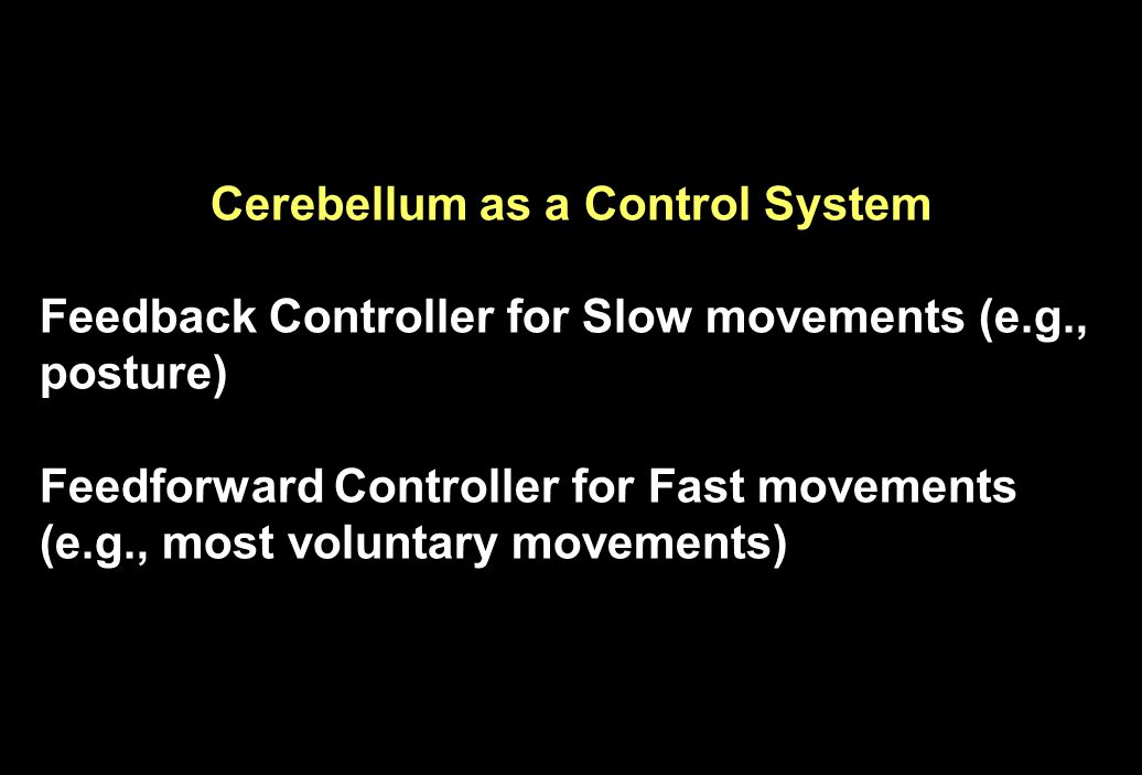 Cerebellum as a Control System Feedback Controller for Slow movements (e.g., posture) Feedforward Controller for Fast movements (e.g., most voluntary movements)