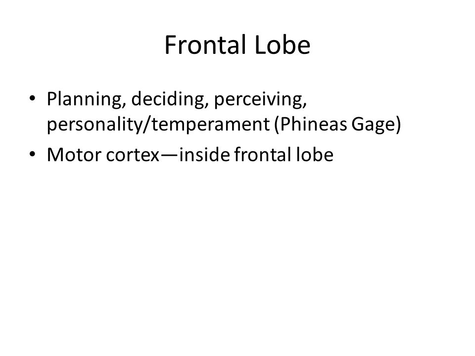 Frontal Lobe Planning, deciding, perceiving, personality/temperament (Phineas Gage) Motor cortex—inside frontal lobe