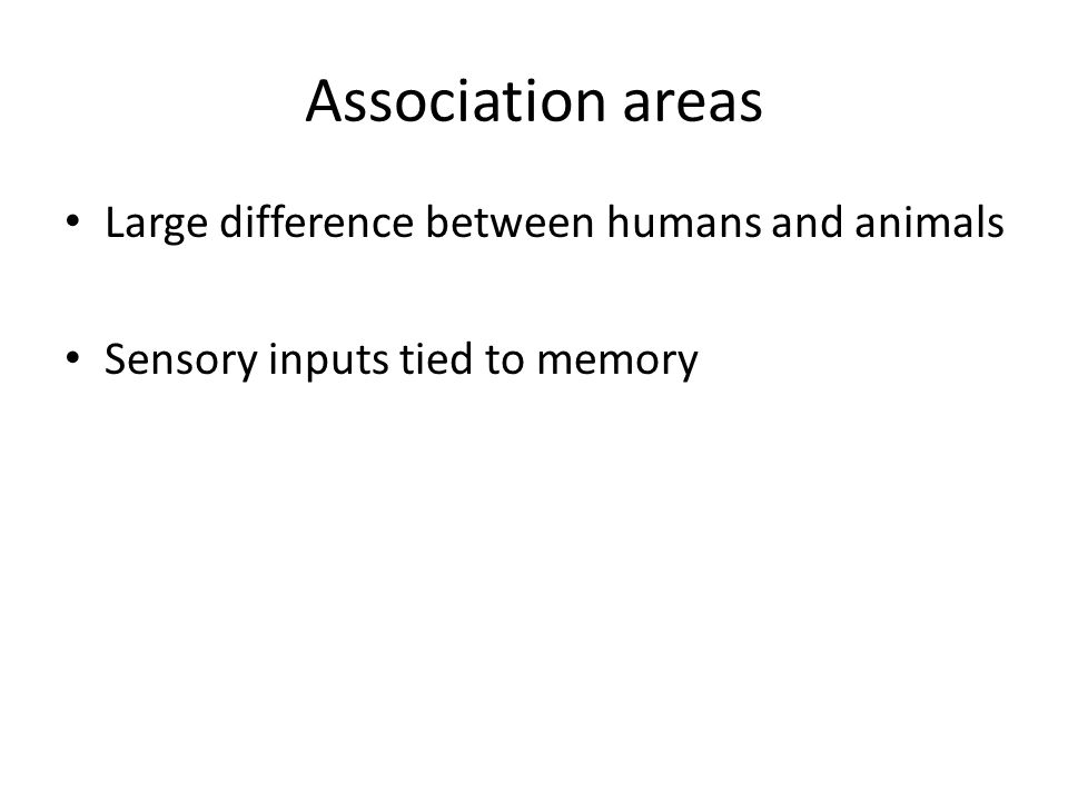 Large difference between humans and animals Sensory inputs tied to memory