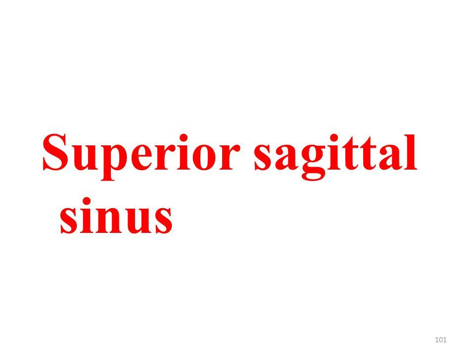 101 Superior sagittal sinus