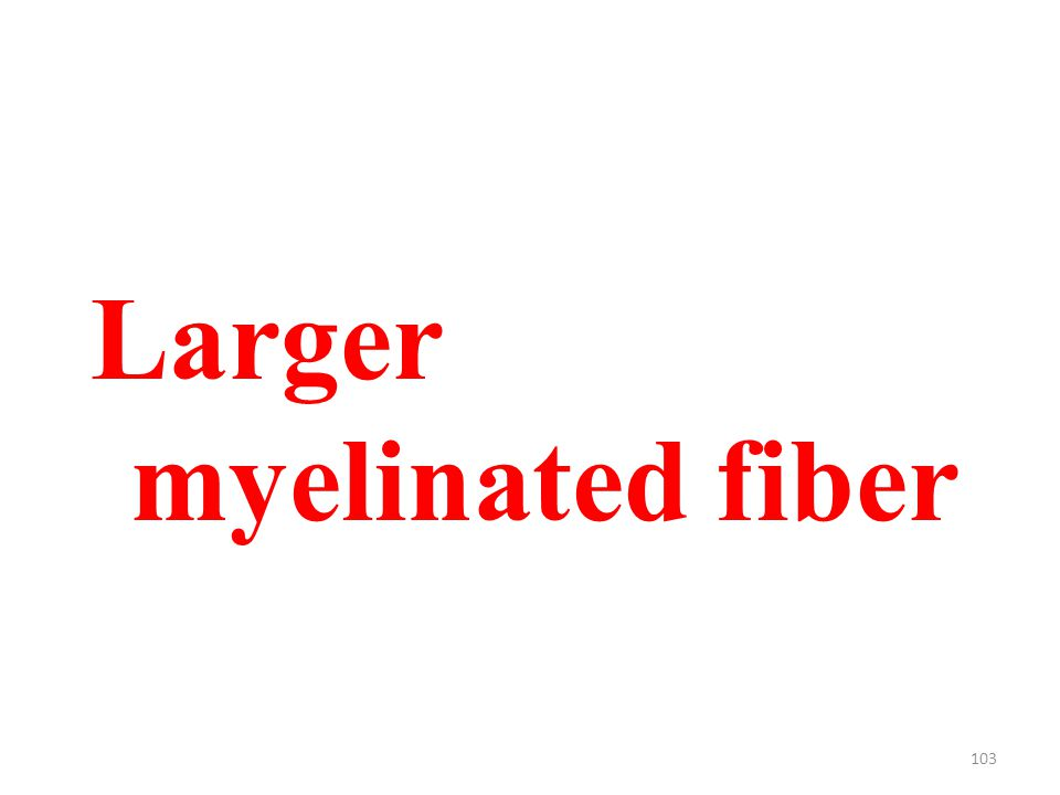 103 Larger myelinated fiber