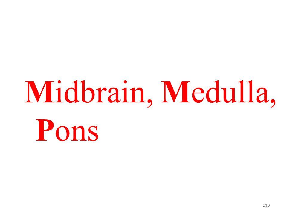 113 Midbrain, Medulla, Pons