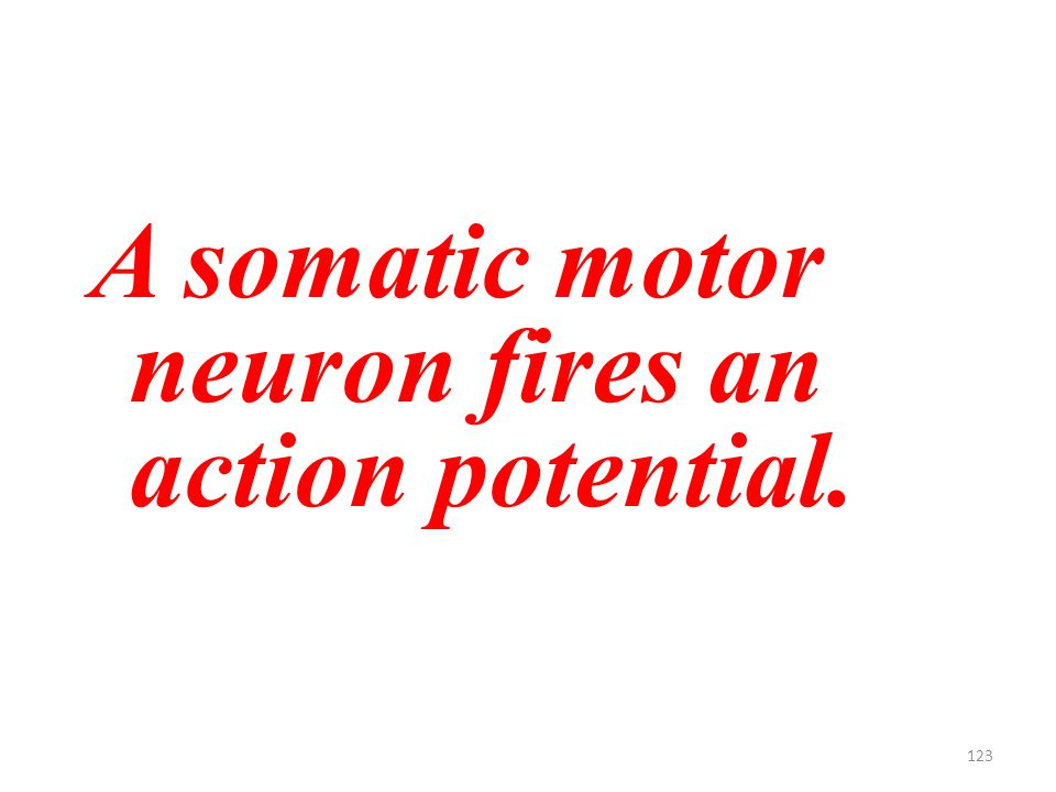 123 A somatic motor neuron fires an action potential.