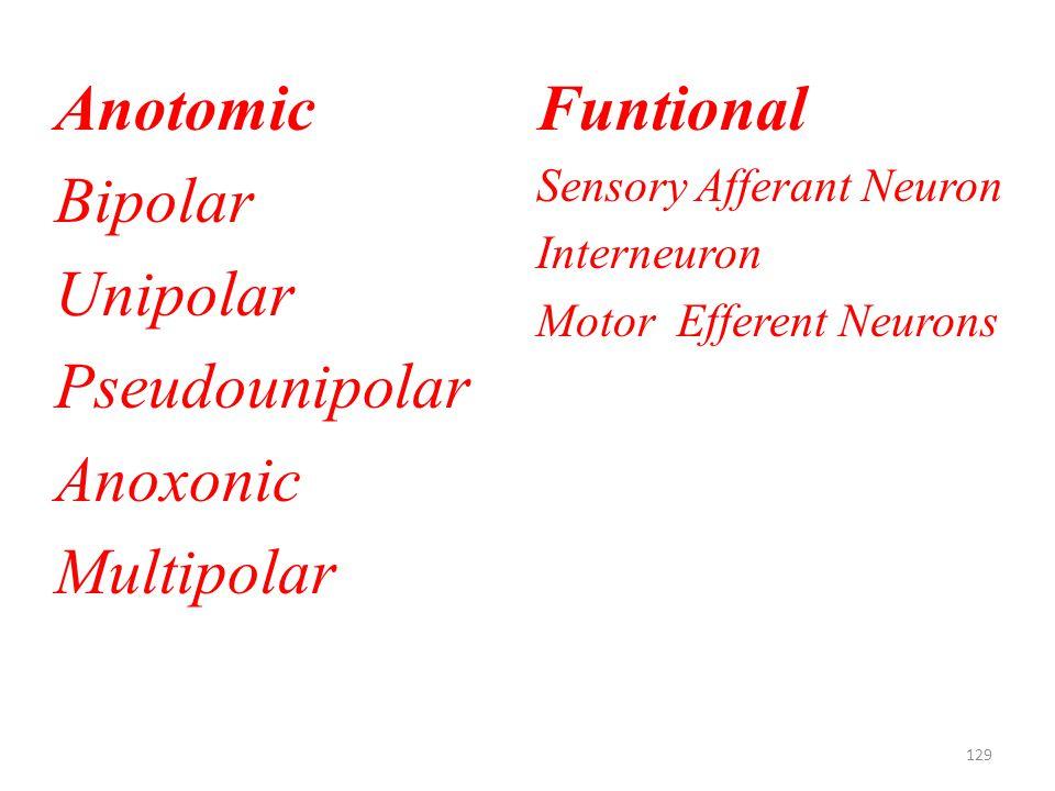 129 Anotomic Bipolar Unipolar Pseudounipolar Anoxonic Multipolar Funtional Sensory Afferant Neuron Interneuron Motor Efferent Neurons