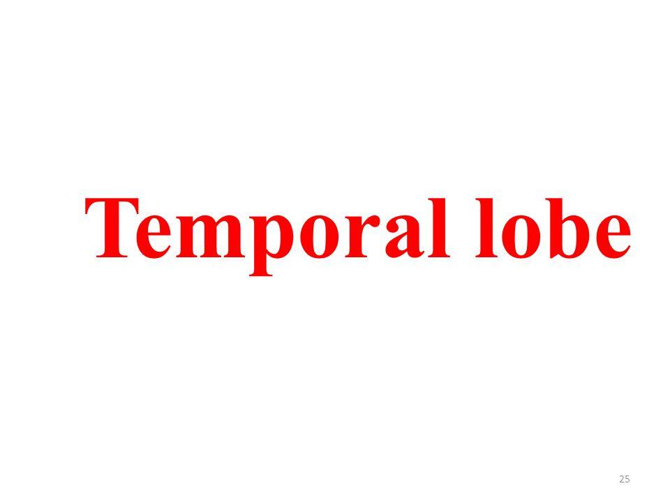 25 Temporal lobe
