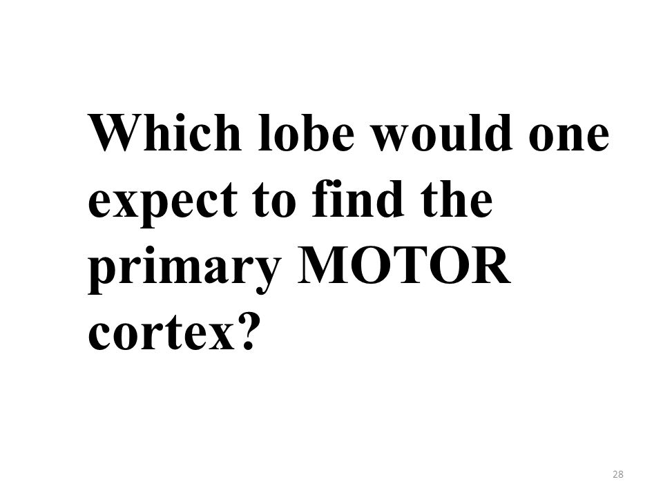 28 Which lobe would one expect to find the primary MOTOR cortex