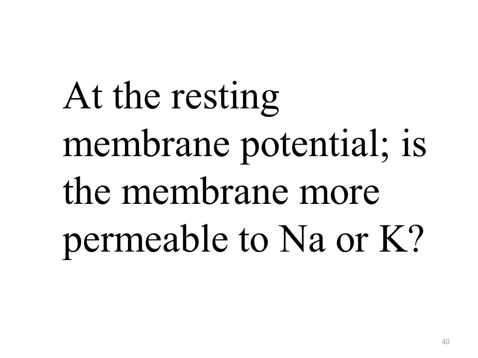 40 At the resting membrane potential; is the membrane more permeable to Na or K?