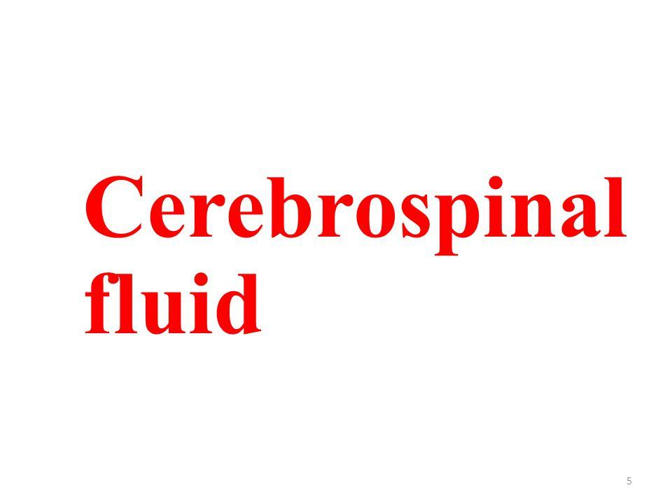 5 Cerebrospinal fluid