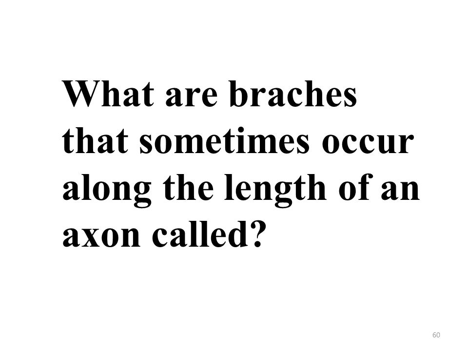 60 What are braches that sometimes occur along the length of an axon called?