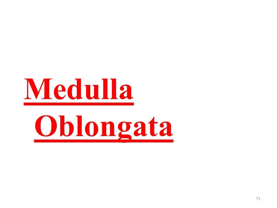 71 Medulla Oblongata