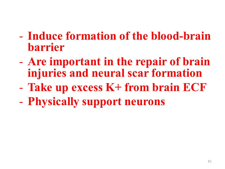 81 -Induce formation of the blood-brain barrier -Are important in the repair of brain injuries and neural scar formation -Take up excess K+ from brain ECF -Physically support neurons